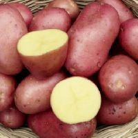 kartoffel christa